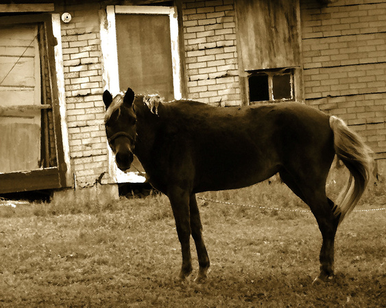 Horse, At An Old House_72dpi_Christopher Woods